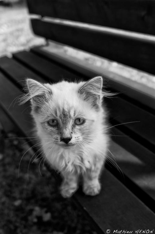 Le chat de Anna