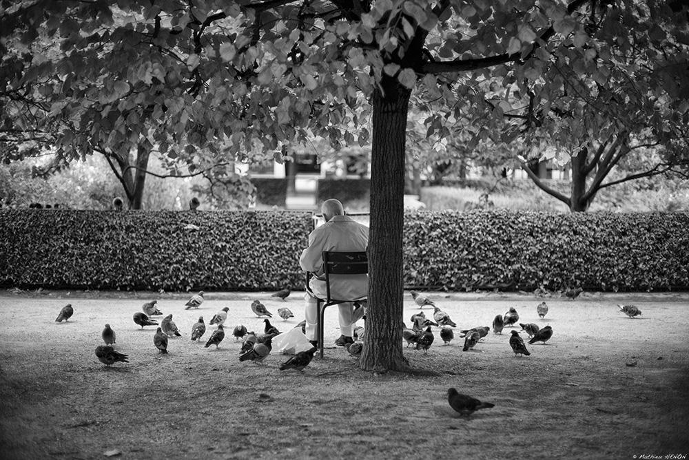 Le pigeon.jpg