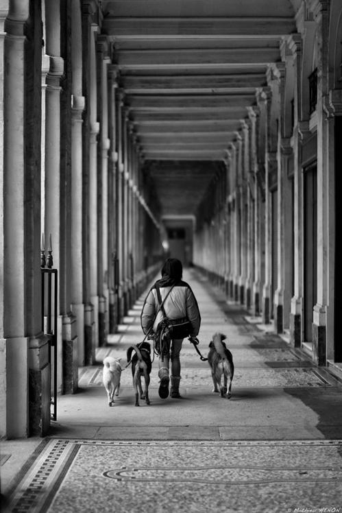 Temps de chiens.jpg