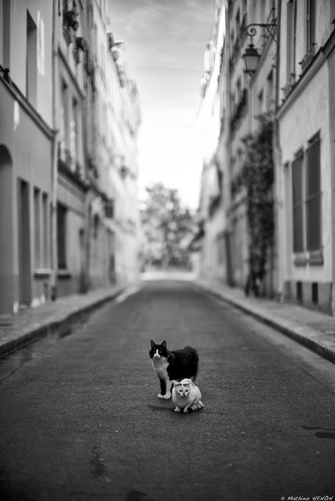 Chat noir, chat blanc.jpg
